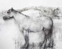 Bridget Macdonald, The Midsummer Mare, 2014, charcoal & pastel on paper, 48 x 60 cm